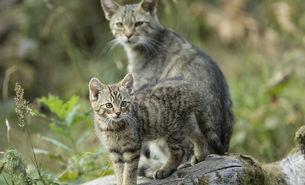 Junge Katze mit Mama