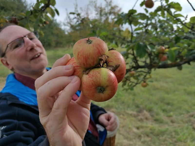 Apfelernte 2020 - BUND OV Karben/Niddatal